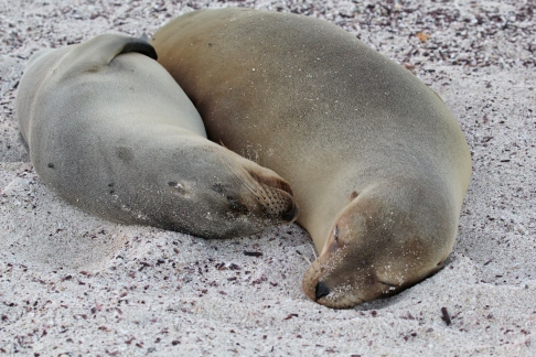 6-7 Sea Lion & Pup