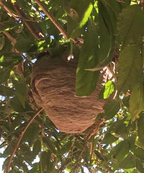 Wasp-Nest-2
